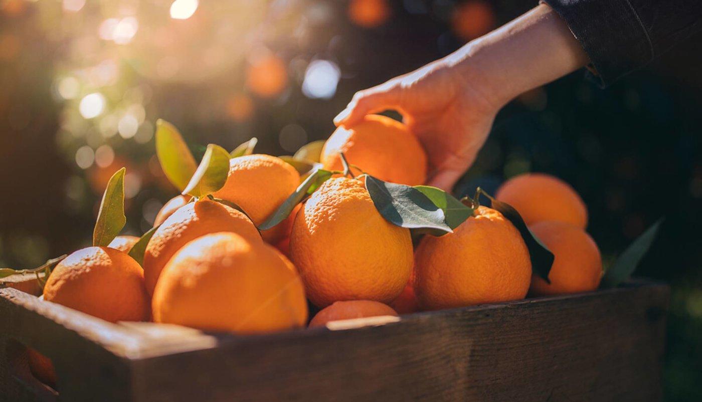Vitamin C i sve što trebate znati o njemu čeka vas na linku!